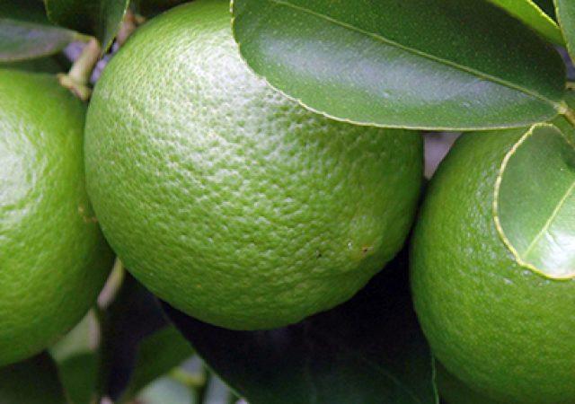 Limão para uma vida saudável