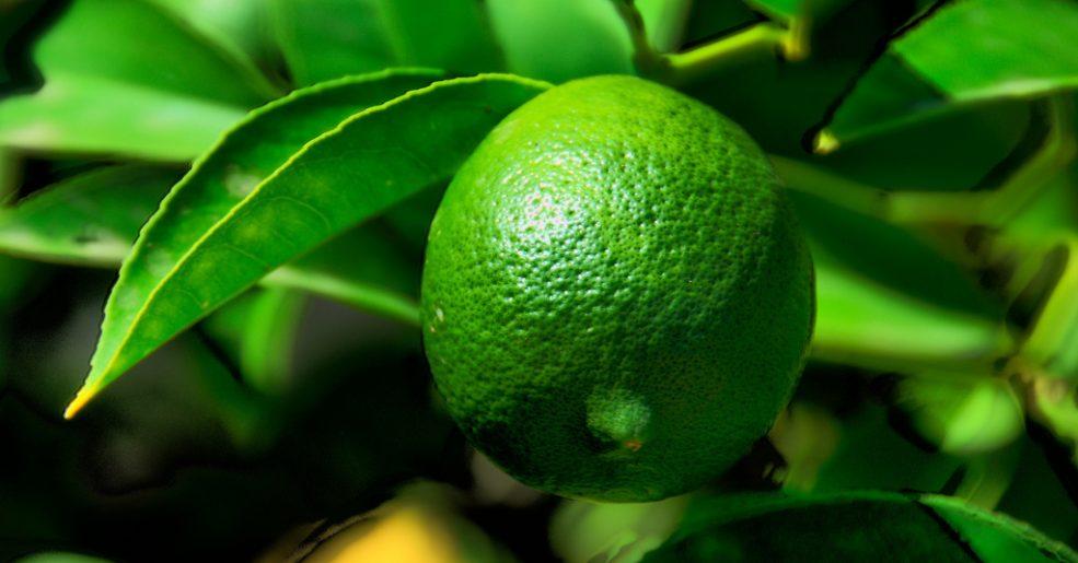 Limão ajuda na digestão e na dieta