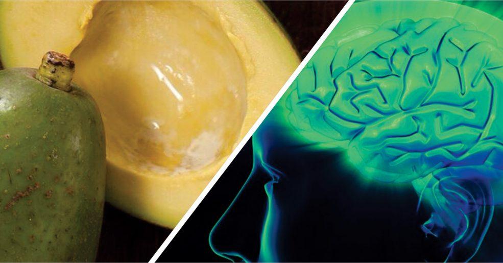 Consumo de Abacate ajuda a melhorar a memória