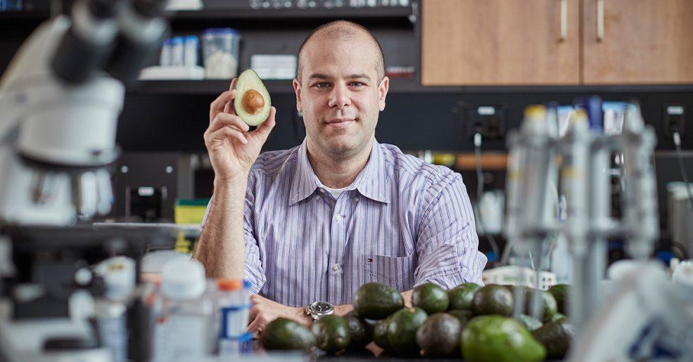 Abacate pode ser segredo para tratar leucemia