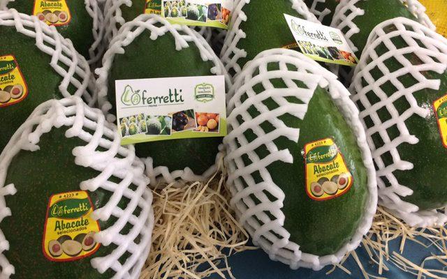 Abacate previne doenças cardiovasculares e controla o colesterol