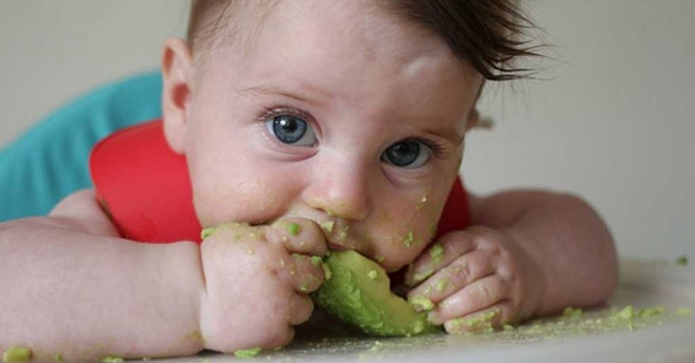 Abacate: como utilizar na alimentação das crianças?