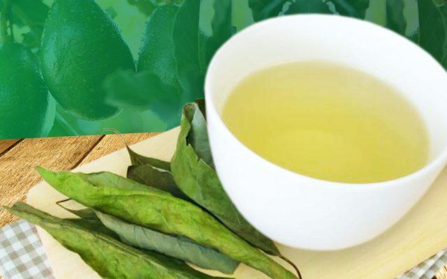 Chá de folha de abacate: saiba para que serve e como prepará-lo